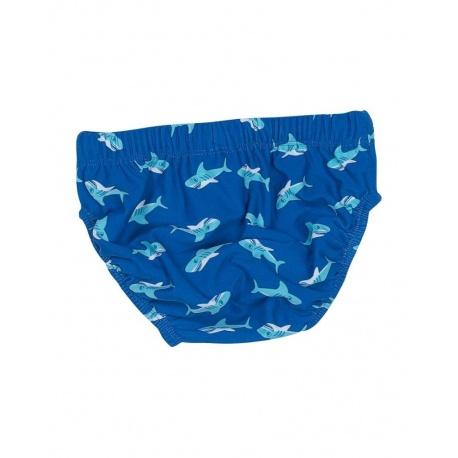 Zwemluier Haai